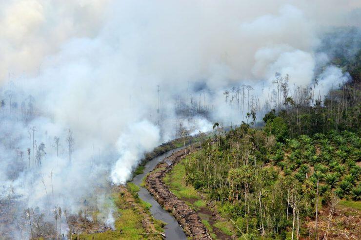Kebakaran Hutan - nalar.id